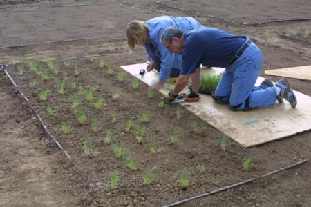 Lorraine Van Kekerix and Fred Schack planting UC Verde plugs, 9/20/10