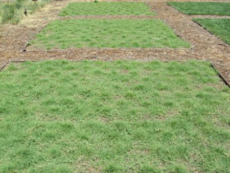UC Verde plots, 5/13/11