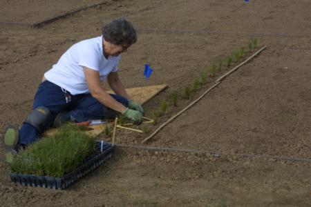 Pat Schink planting Carex, 9/20/10